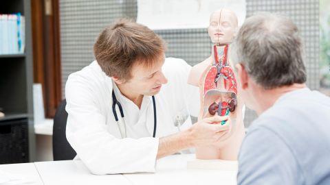Chronische Nierenerkrankung: Ein Arzt und ein weiterer Mann sitzen an einem Tisch, auf dem ein künstliches Anatomiemodell des menschlichen Rumpfes steht. Der Arzt zeigt auf die Darstellung einer Niere.